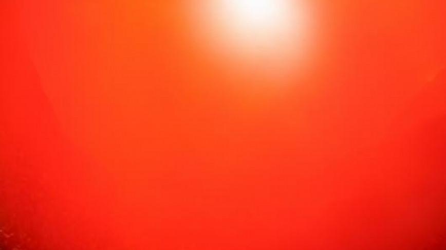 Visual of Ferrari Tomato