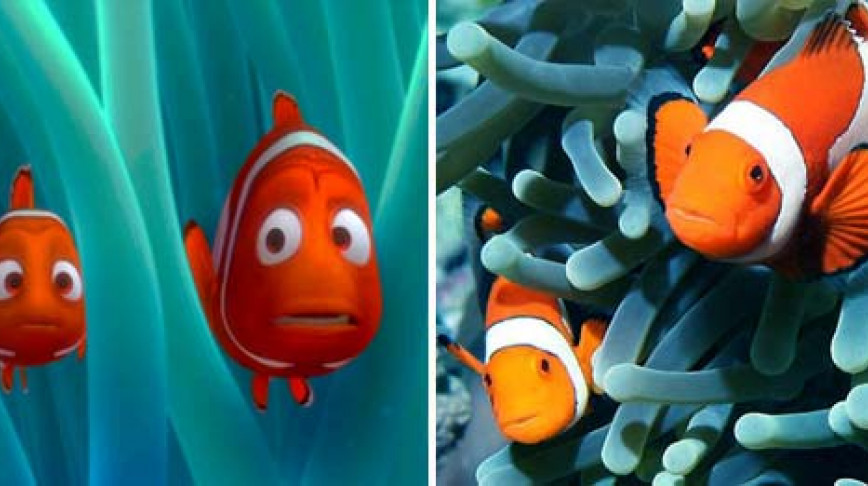 Visual of Fake for Real: Redefining Nemo
