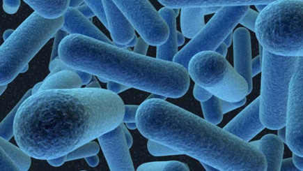 Visual of Bacteria That Eat Waste & Shit Petrol