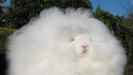 Visual of Next Rabbit