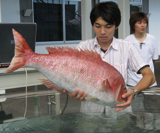 Visual of Robotic Red Snapper