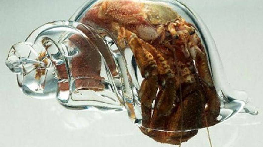 Visual of A hermit crab in a glass house
