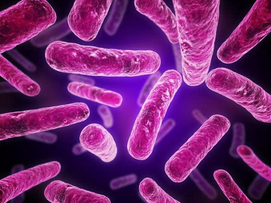 Visual of Computer versus bacteria
