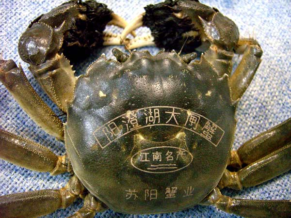 Visual of Counterfeit Crab