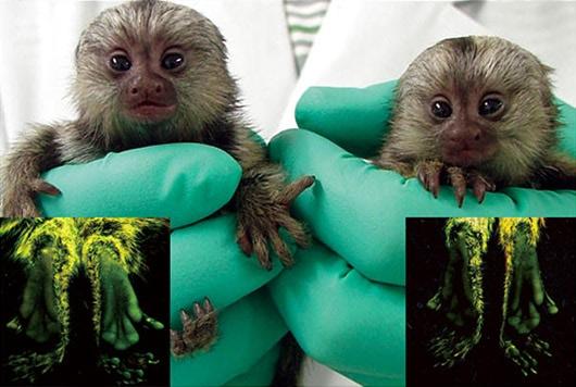 Visual of Green Glowing Monkeys