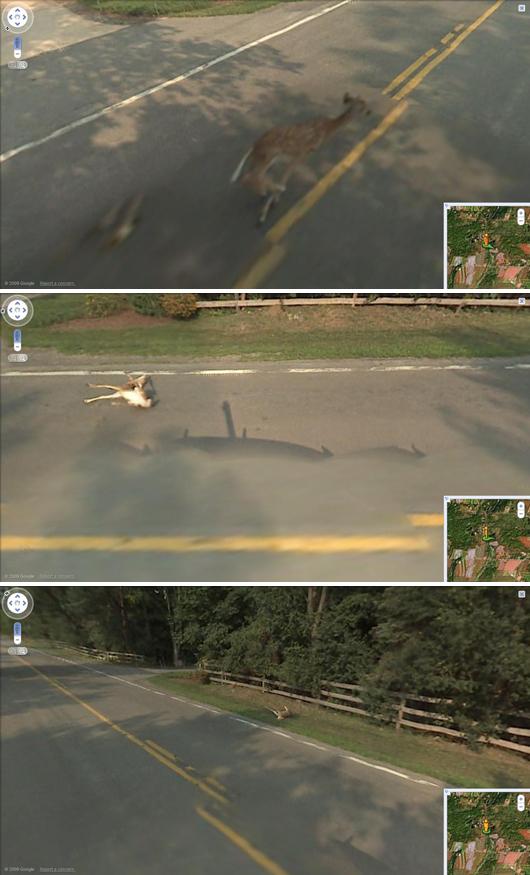 Visual of Google Kills Bambi