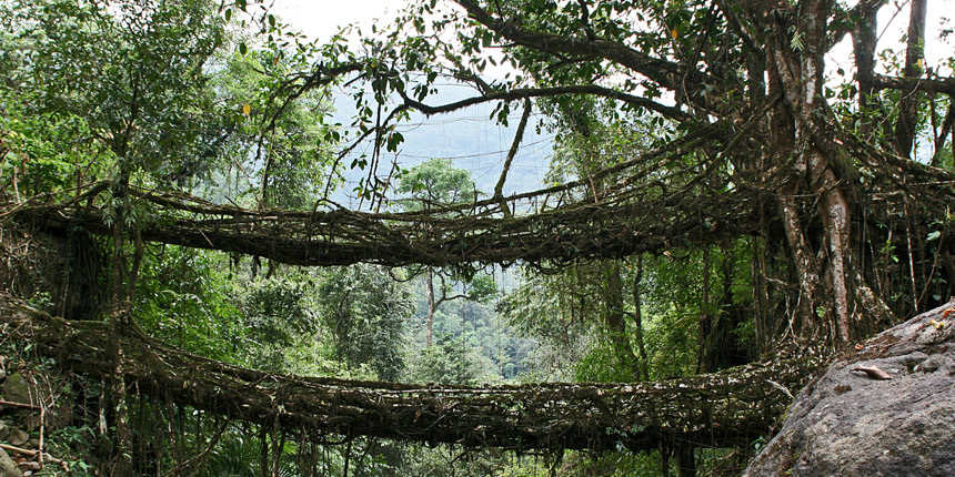 Visual of Living Root Bridges