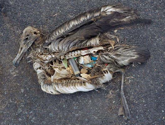 Visual of Plastic Birds