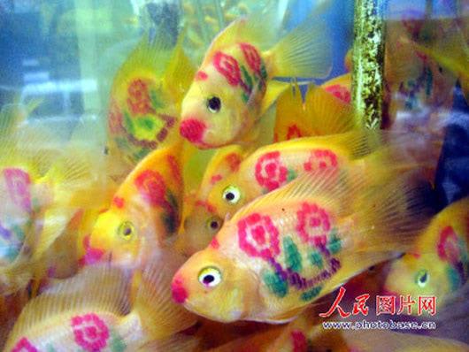 Visual of Tattooed Goldfishes
