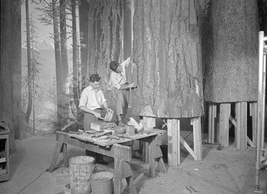 Visual of Tree Construction