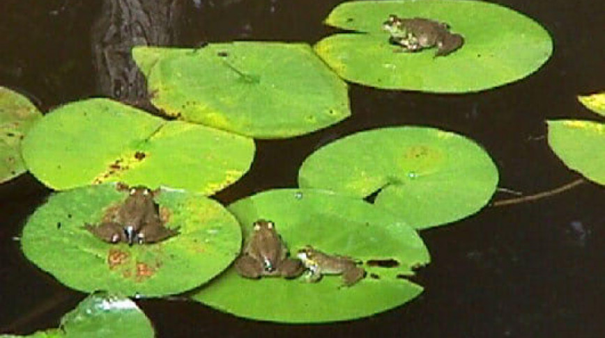 Visual of Monitoring your computer's activity like a frog pond