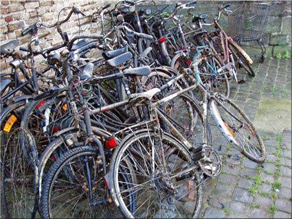 Visual of Wild bikes