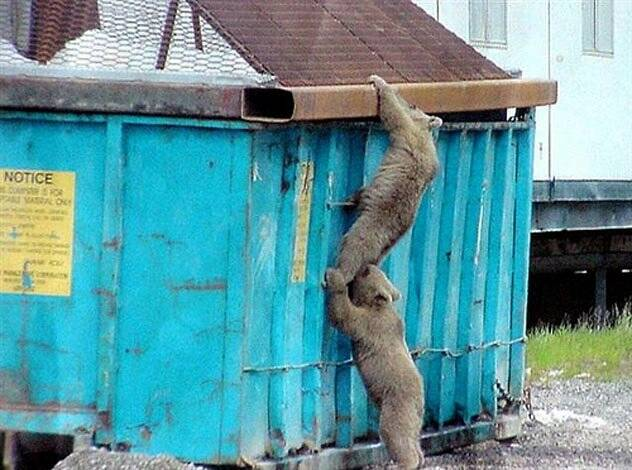 Visual of A Savannah Inside the Dumpster