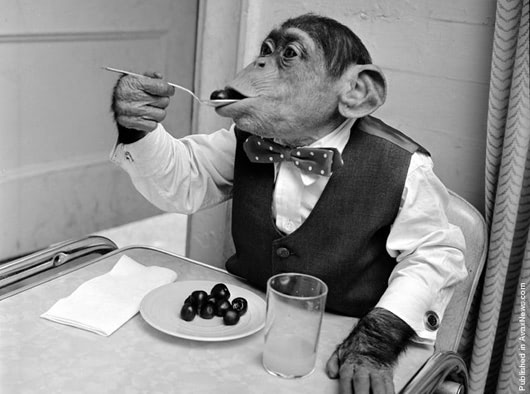 Visual of Apes Like Cooked Food, and What that Means for Human Evolution
