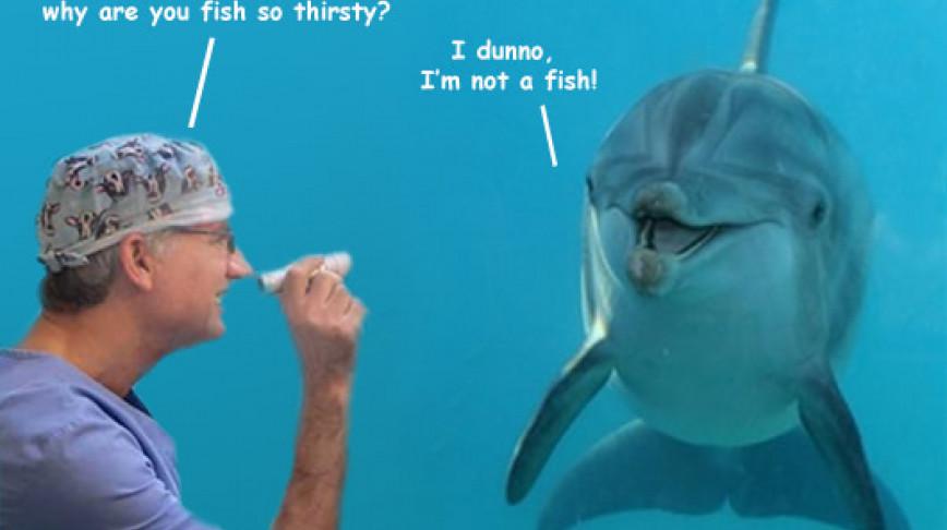 Visual of Babel Fish