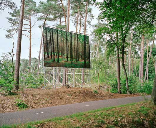 Visual of Billboard in the Forest