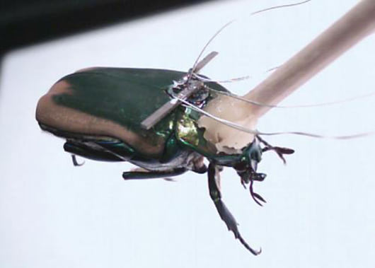Visual of Bugged Bugs