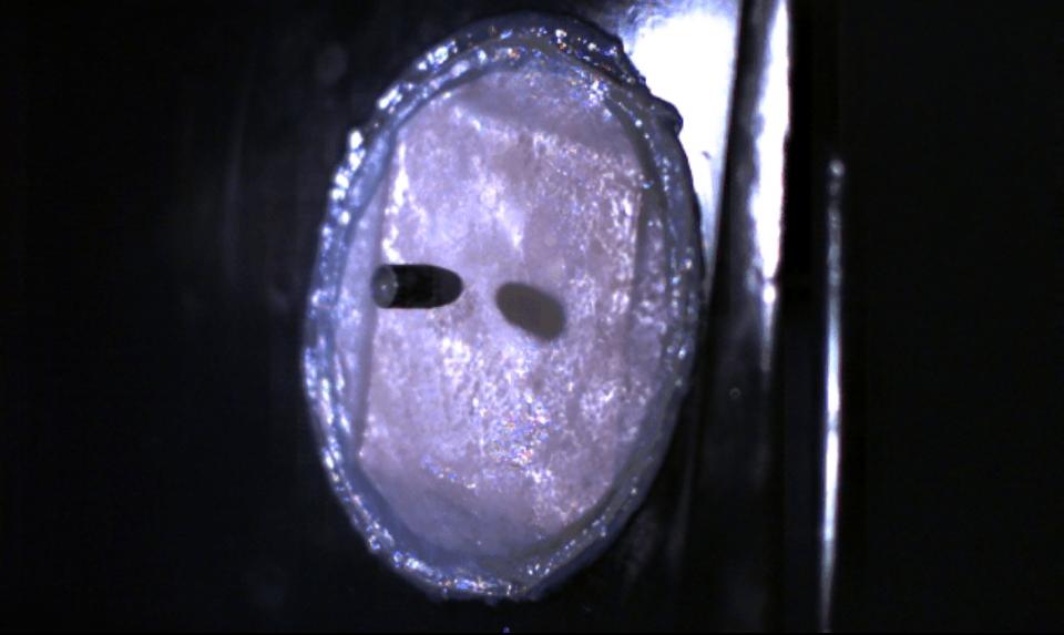 Visual of Bulletproof Skin