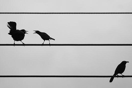 Visual of City Living Splits Up Blackbirds
