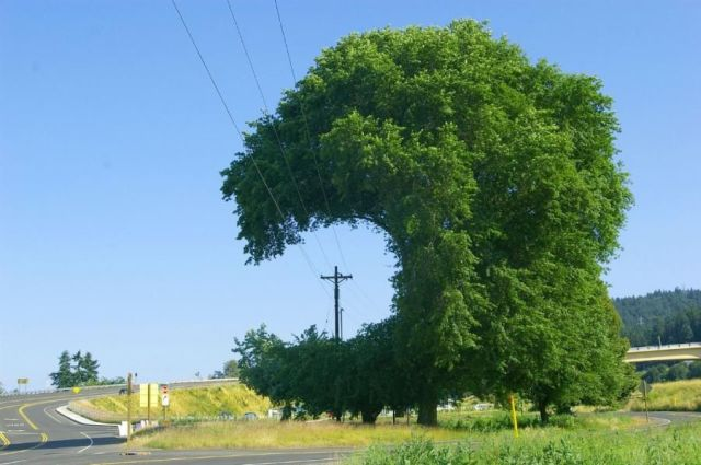 Visual of Electric Topiary