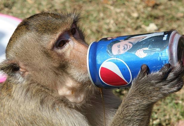 Visual of Monkey See, Monkey Buy