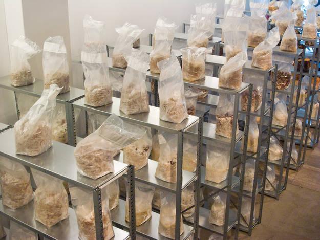 Visual of Mushrooms in the Mokum