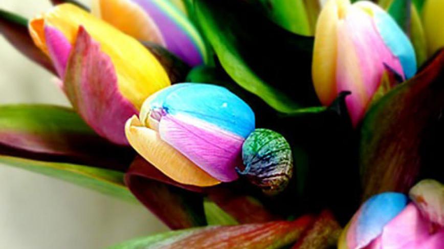 Visual of Rainbow Tulips