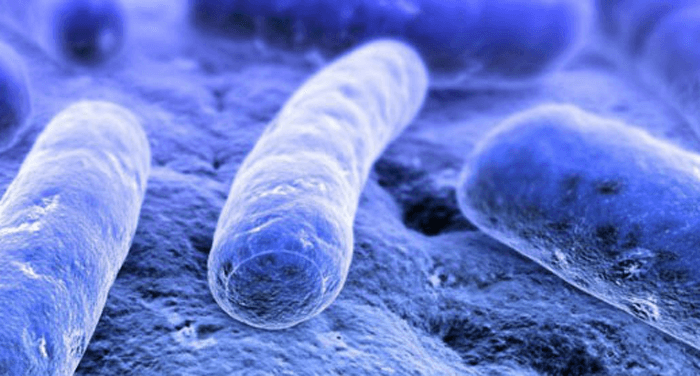Visual of Social Microbial life