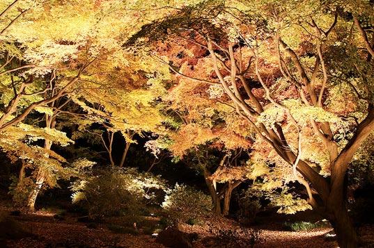 Visual of Streetlight Trees