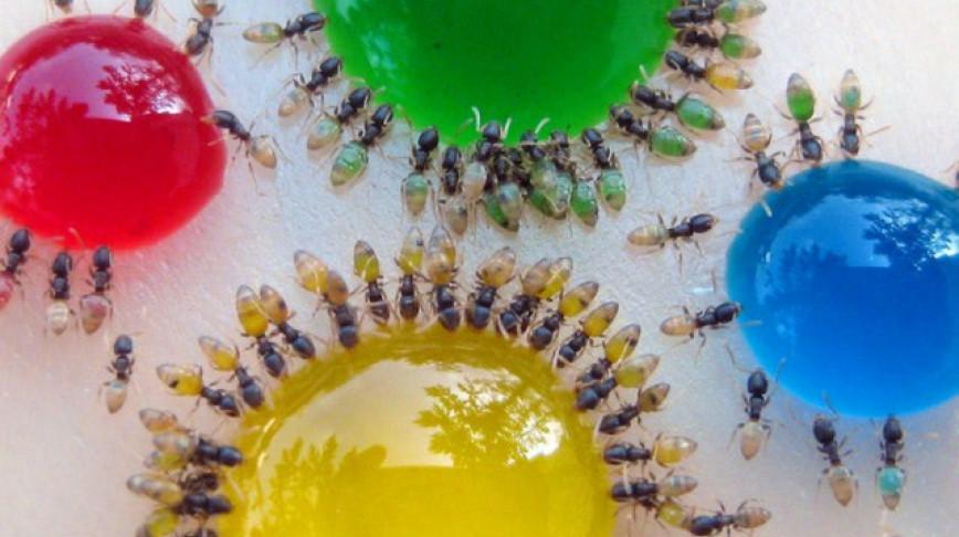 Visual of The Amazing Technicolor Dream Ant
