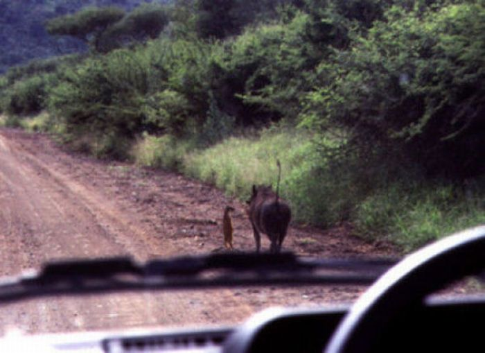Visual of Timon and Pumbaa
