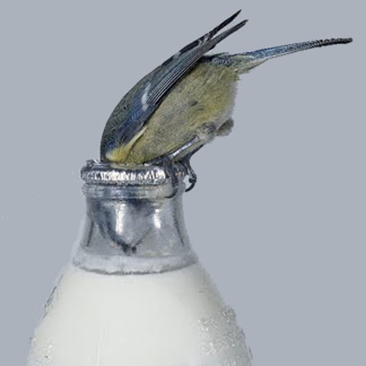 Visual of Urban Birds have Bigger Brains