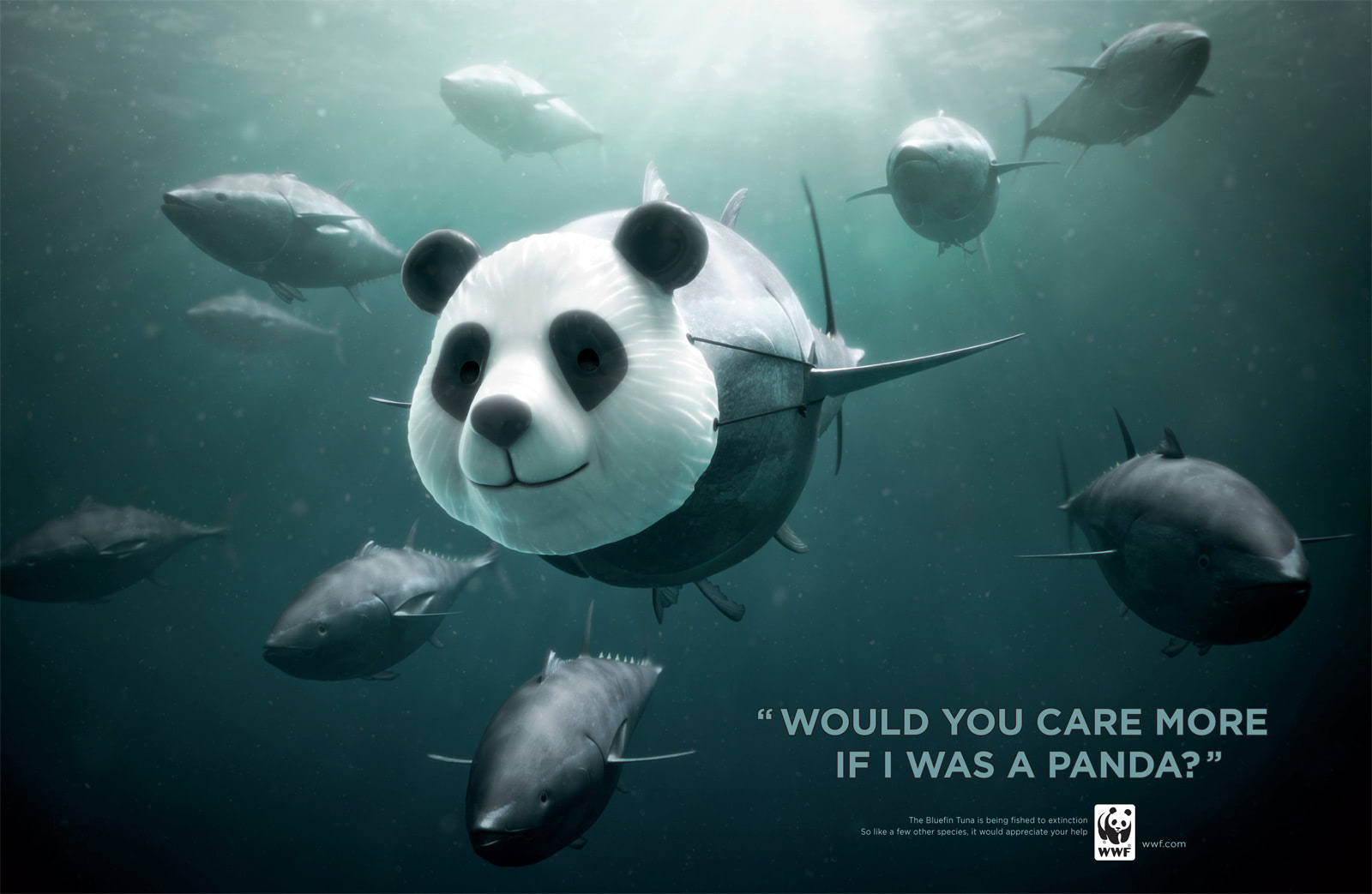 Visual of Would you care more if I was a Panda?