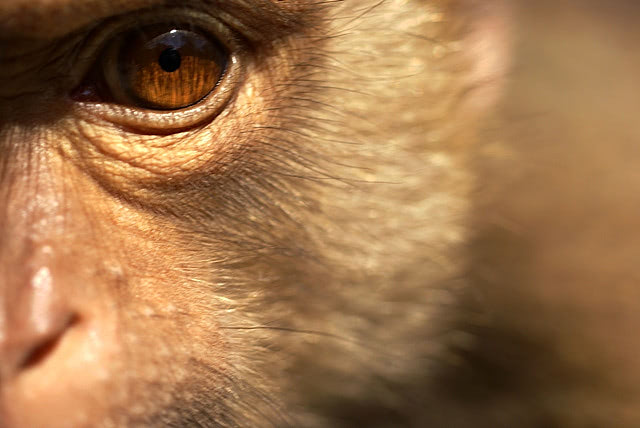 Visual of Brain Implant Restores Memory to Cocaine-Addled Monkeys
