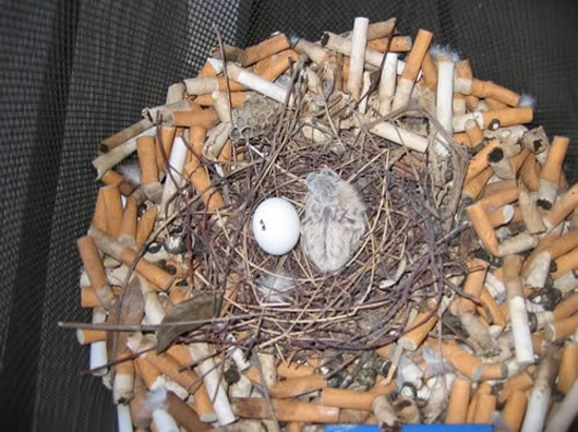 Visual of Cigarettes: Bad for You, Good for Birds