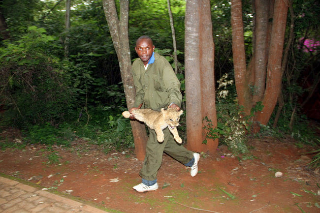 Visual of Lions Relocate to the Suburbs
