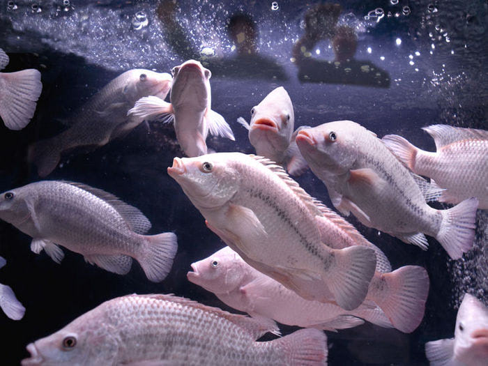 Visual of Dumpster Fish the Future of Farming