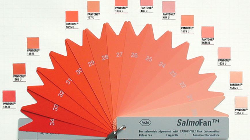 Visual of Dyeing Salmon Pink for Farms and Profit