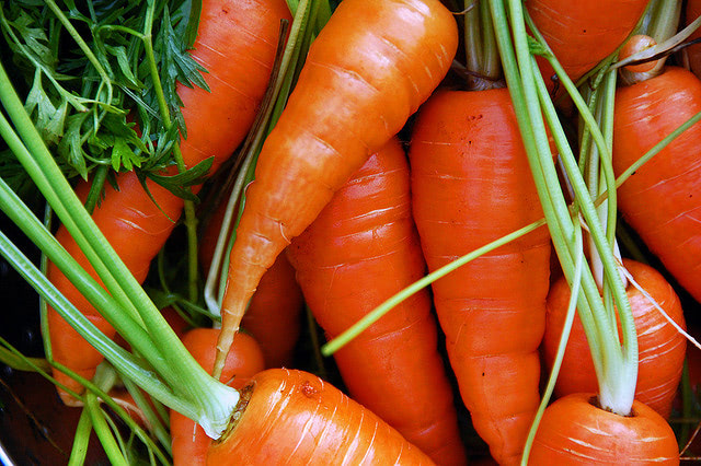 """Visual of First """"Farm""""aceuticals Grown in Carrots"""