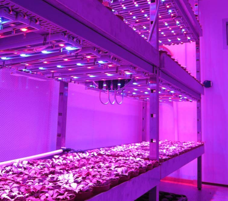 Visual of Growing Plants in the Dark