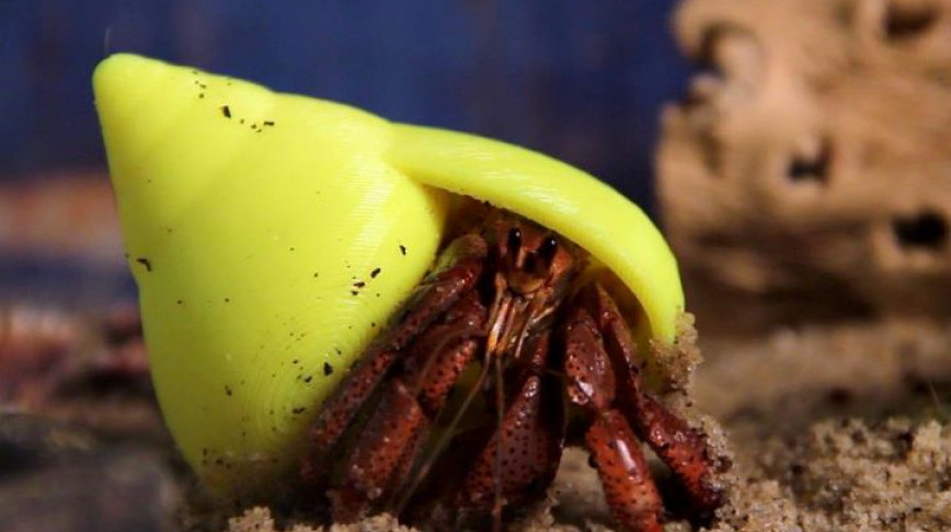 Visual of Hermit Crabs Can Live Like Kings Again
