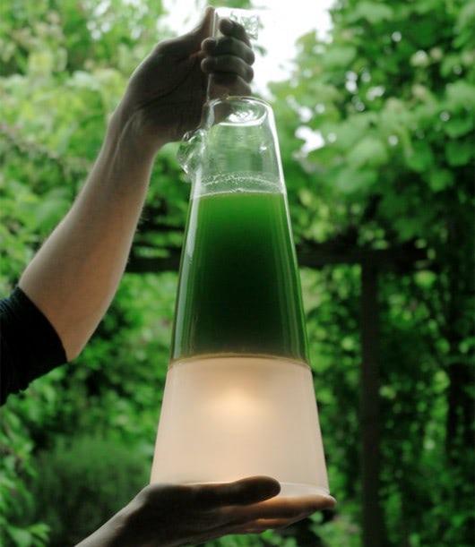 Visual of Latro Algae Lamp