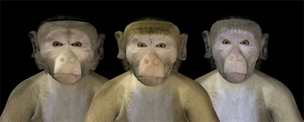 Visual of Monkeys Fall into the 'Uncanny Valley' Too