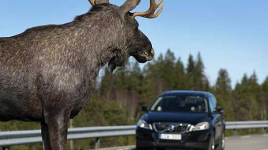 Visual of New Volvo Recognizes Shapes of Animals like Deer & Elk to Reduce Crash Impact.