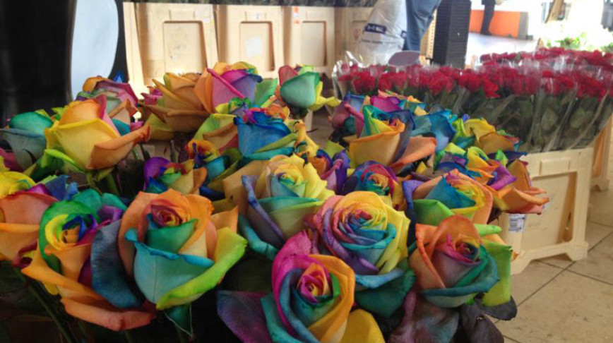 Visual of Rainbow Roses