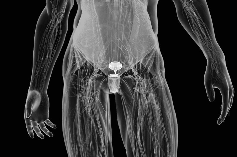 Visual of Thirsty? With a Cyborg Bladder, You'll Never Need to Drink