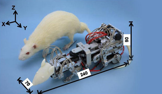 Visual of A Robot to Make Rats Depressed