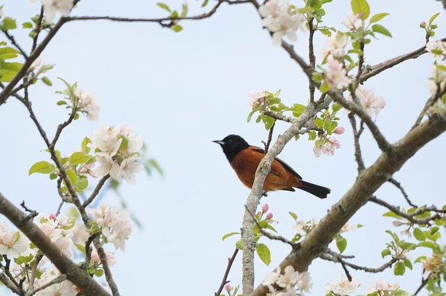 Visual of App Brings Big Data to Birdwatching