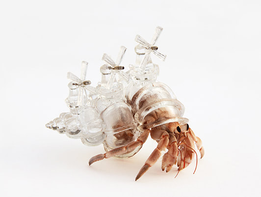 Visual of Crystalline Cityscapes for Homeless Hermit Crabs