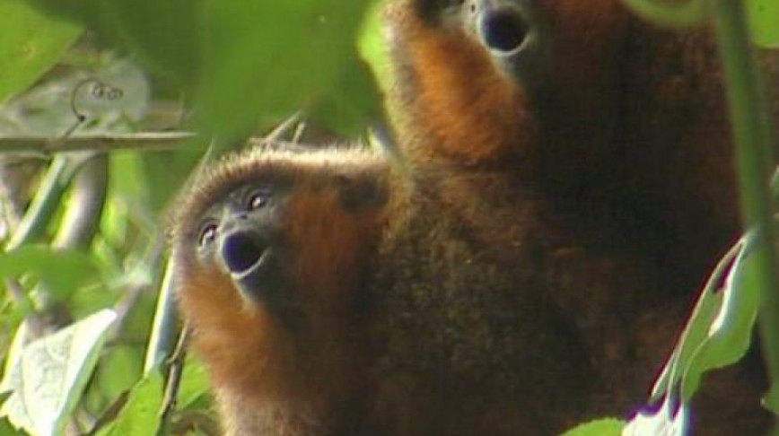 Visual of First Monkey Named after a Website
